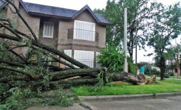 Fuerte tormenta pasó por Federal y dejó un verdadero caos