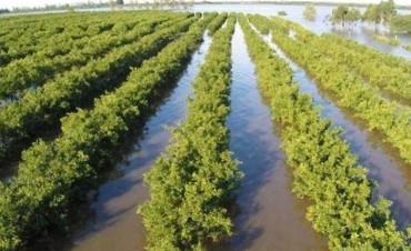 Entre Ríos fue excluída de la emergencia agropecuaria