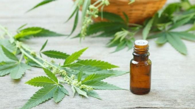 Debaten importación de cannabis