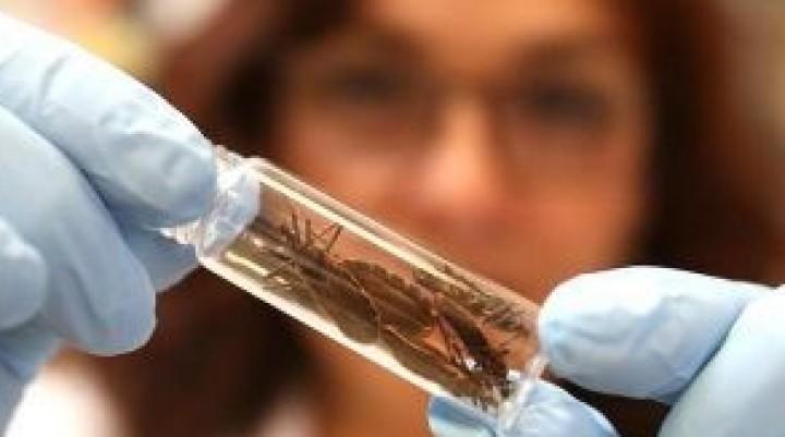 Aprueban medicamento para tratar la enfermedad de Chagas   15 abril, 2018