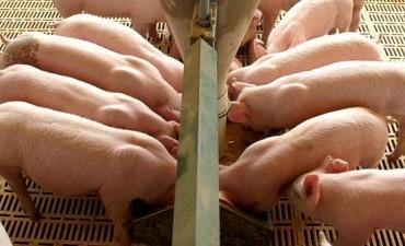 Impulsan la emergencia para los sectores citrícola, porcino y avícola de Entre Ríos