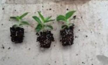Generan en Entre Ríos medicación oncológica a partir de una planta