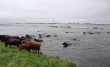 Bajó el río en Paraná luego de varias semanas