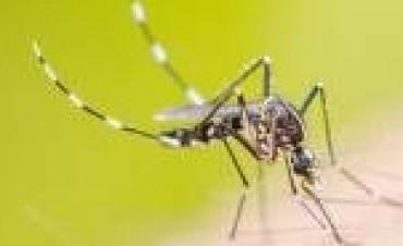 Se espera un pico de casos de dengue, zika y chikungunya en el país