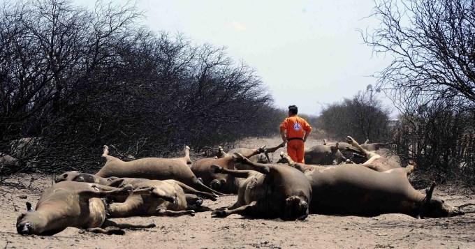 Fuego arrasó con más de un millón de hectáreas en La Pampa