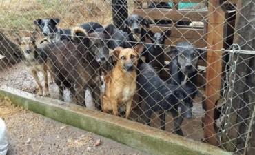 Proponen distinguir a Integrantes del Refugio Canino