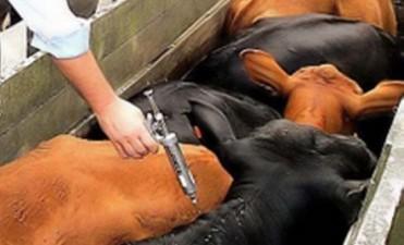 Entre Ríos: hasta el 15 de mayo se vacunará contra aftosa