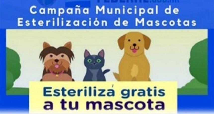 CAMPAÑA MUNICIPAL DE CASTRACIÓN GRATUITA