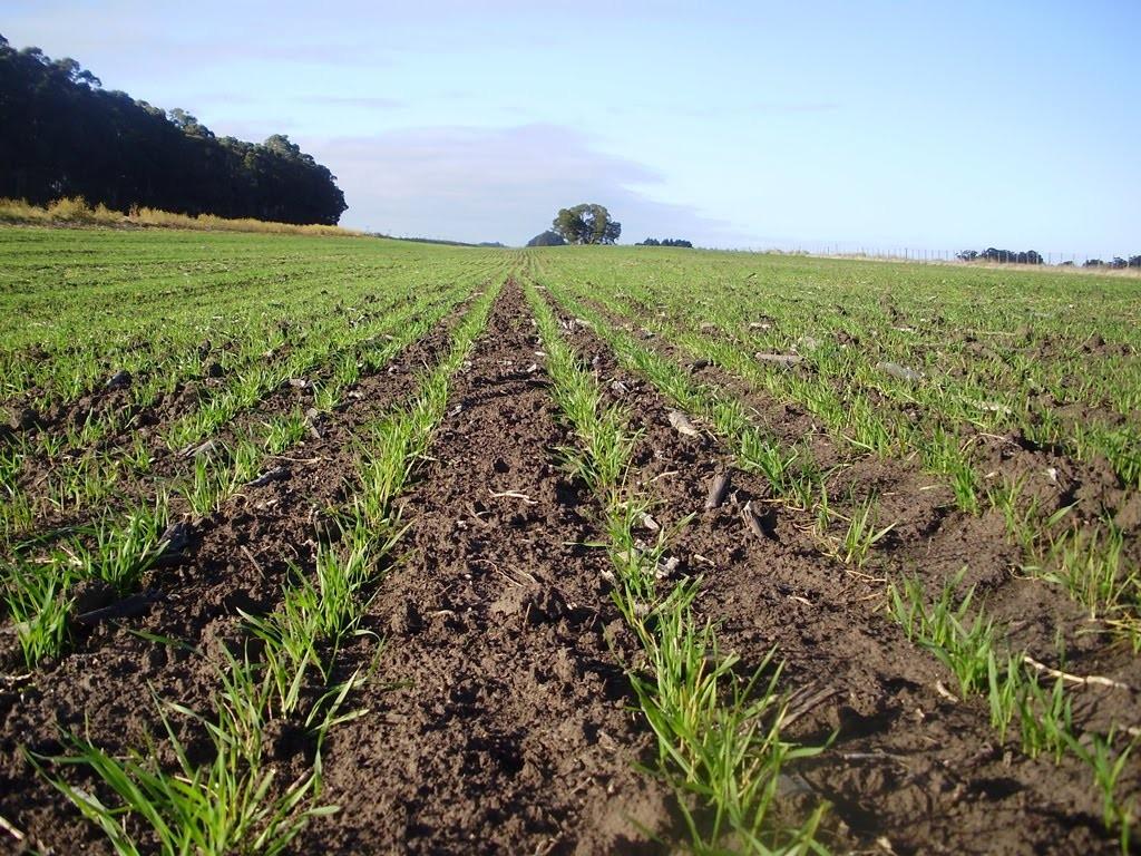 Buenas expectativas para el inicio de la campaña de siembra de trigo en Entre Ríos