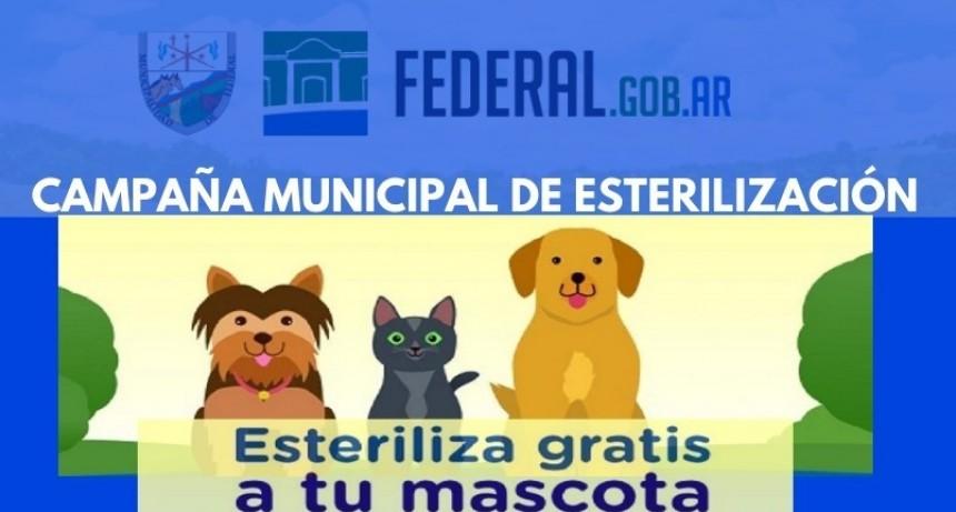 CAMPAÑA MUNICIPAL DE CASTRACIÓN GRATUITA DE MASCOTAS