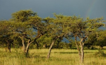 Para evitar desmontes se incentivará económicamente a productores entrerrianos