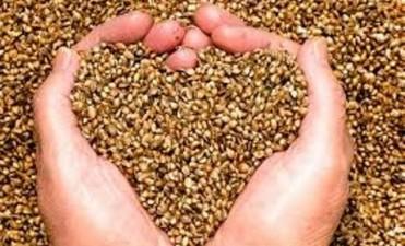 Cuales son los principales puntos del proyecto de ley de semilllas