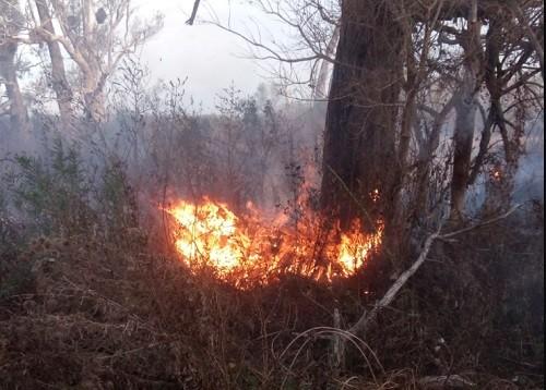 Incendios en el Delta: Prefectura identificó a 7 sospechosos, 2 de ellos poseen antecedentes judiciales