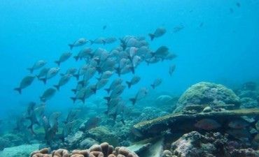 El cambio climático redistribuirá los recursos pesqueros en el mundo