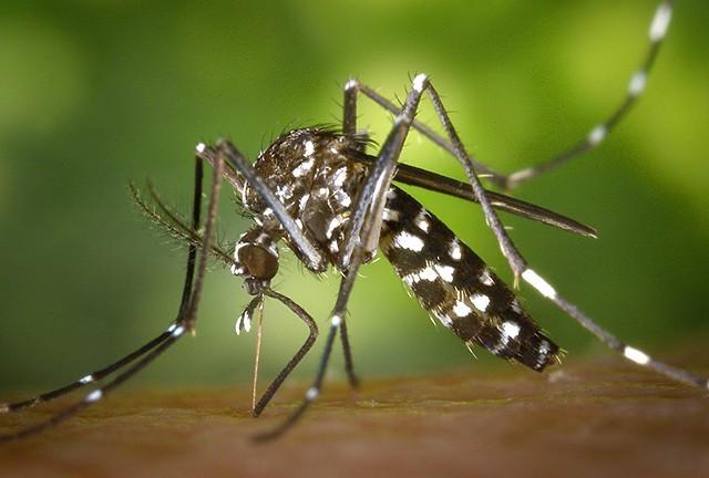 Paraná adhirió a la ley provincial de lucha contra el Mosquito Aedes Aegypti