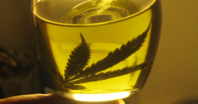 Neuquén aprobó el uso de cannabis medicinal